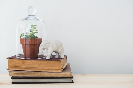 living things: Stylish home interior decor, vintage style: old books, green plants and decorative objects on a table by the white wall.