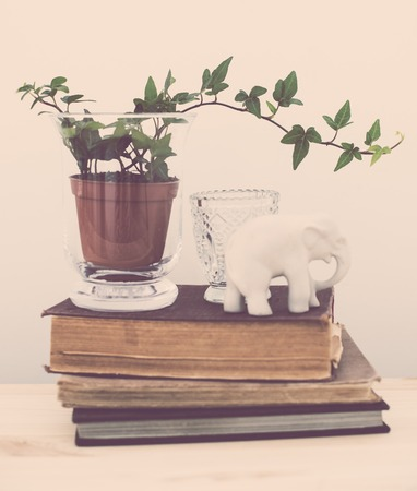 wall decor: Stylish home interior decor, vintage style: old books, green plants and decorative objects on a table by the white wall. Hipster filtered.