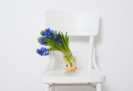 bouquet fleur: Spring flowers, blue hyacinth in a vase on a white vintage chair in white room interior. Banque d'images
