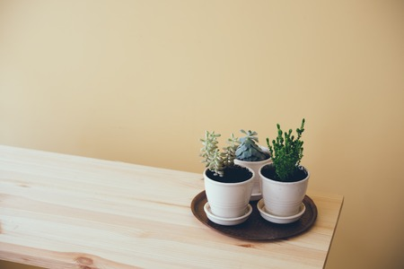 interior decor: Simple home interior decor, green plants on a wooden table by the wall background Stock Photo