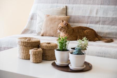 거실, 아늑한 가정 인테리어에 소파에 누워 큰 게으른 생강 고양이