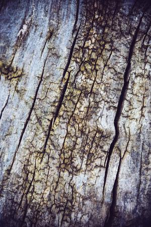 Textur der Baumrinde mit Rissen und Rauheit, natürliche abstrakten Hintergrund