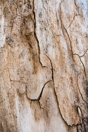 bark background: Texture of tree bark with cracks and roughness, natural abstract background Stock Photo