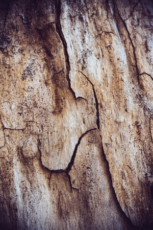 roughness: Texture of tree bark with cracks and roughness, natural abstract background Stock Photo