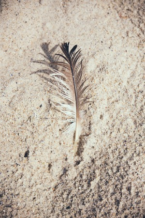 single animal: Light bird feather in the sand on the beach Stock Photo