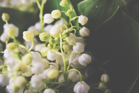 flor de lis: Un ramo de lirios frescos del primer del valle Foto de archivo