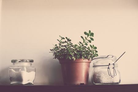 the white house: Domestic plant in a pot and jars on the kitchen shelf on the wall, close-up Stock Photo