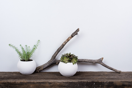 Scandinavian style home decor with plants on a rustic wooden board and white wall background. Stock Photo