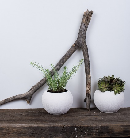 wall decor: Scandinavian style home decor with plants on a rustic wooden board and white wall background. Stock Photo