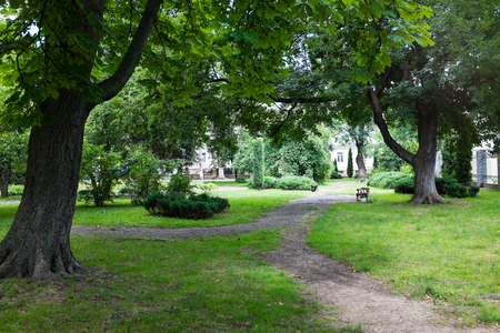 plants and trees: Green trees and plants in summer park, outdoors Stock Photo