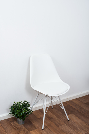 designer chair: White stylish designer chair and green home plant near the wall in empty room interior Stock Photo