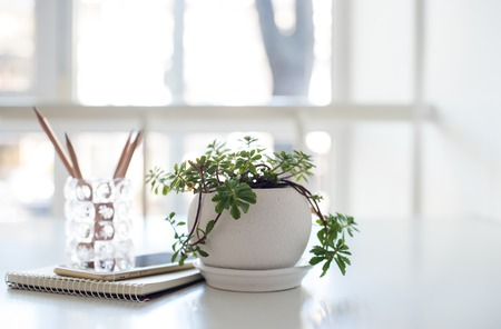Home plant, business notepad and smartphone on the table in a backlight with copy space Stock Photo