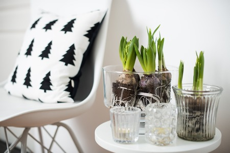 design objects: minimalist furniture and hyacinths Stock Photo