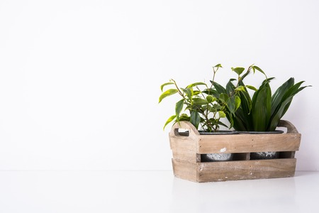 Thuis groene planten in houten doos