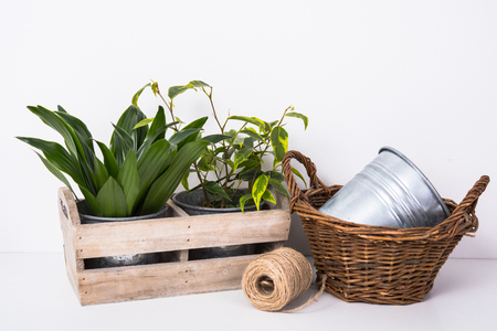 plant in pot: Home green plants in wooden box