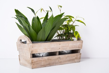 Home green plants in wooden box