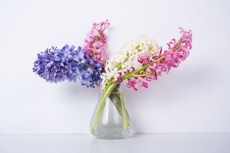 보라색과 분홍색 히아신스 꽃