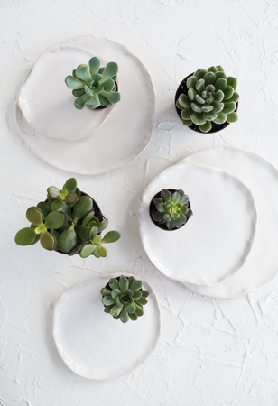 Minimalistic still life with ceramic plates and green succulents Stock Photo