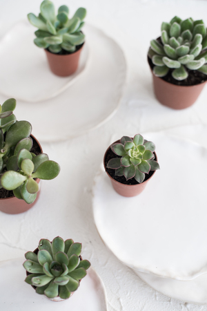 Minimalistic still life with ceramic plates and green succulents Stockfoto