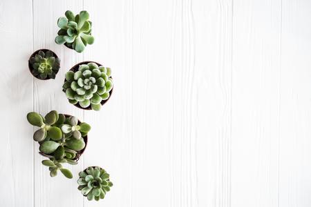 Green house plants potted, succulentson clean white wooden backg