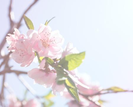 꽃이 만발한 봄 나무의 가지