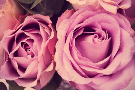 Fresh pink roses macro shot, summer flowers, vintage style