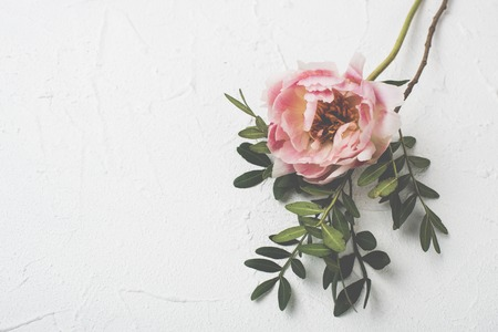 pink peony flower on white textured background