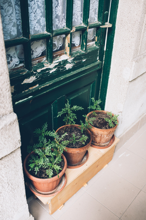 Home plants and herbs in pots on old house veranda, vintage door Stock fotó