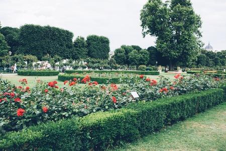 flowering roses flower beds, well-groomed garden