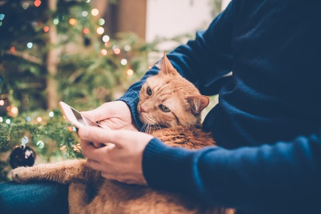 man relaxing at home with ginger cat and smartphone in his hand