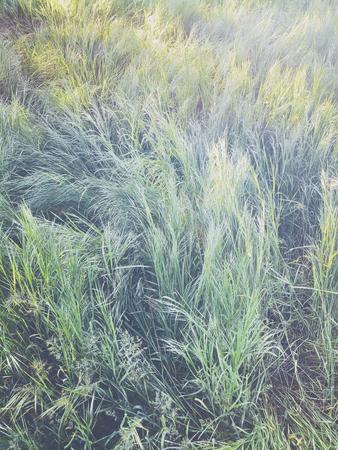 High fresh green grass in spring garden, natural abstract textur