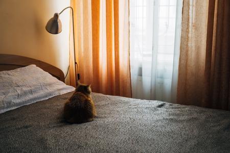 Ginger cat sleeping on bed blanket in bedroom Stock fotó