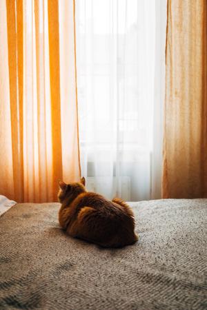 Ginger cat sleeping on bed blanket in cozy home bedroom interior 스톡 콘텐츠