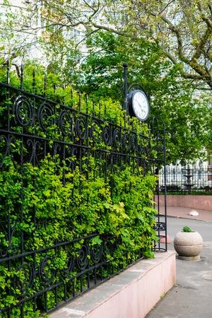 Hermoso seto verde, valla con plantas en primavera