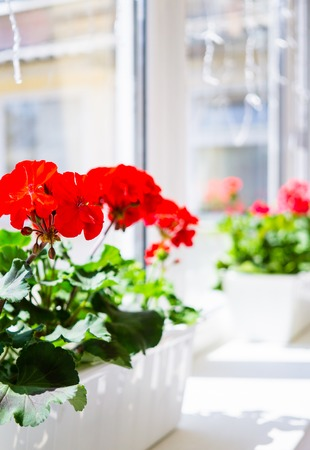 Flores de geranio rojo en el alféizar de la ventana en el balcón de la casa Foto de archivo
