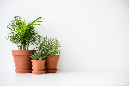 Three ceramic pots with green houseplants and blank white wall