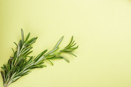 Sprig of rosemary on green background, studio shot