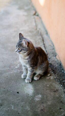 Little gray kitten sitting alone in country house backyard