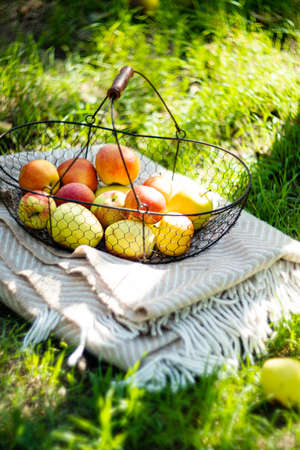 Fresh organic autumn apples in the metal basket and cozy warm plaid on the grass in the garden Stock fotó
