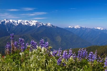 Blue Ridge Mountains: Hurricane Ridge, Olympic National Park, Washington, USA