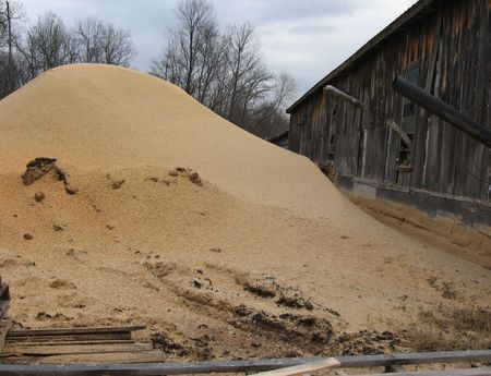 sawdust: Sawdust Pile
