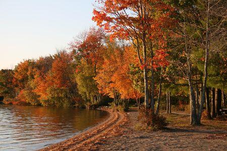 Autumn Trees, Lakeside in Maine
