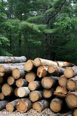 logging: Logging - Freshly Cut Trees