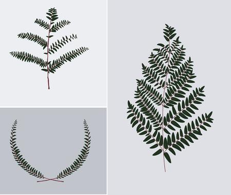 Leaf Illustration Standard-Bild - 93981143