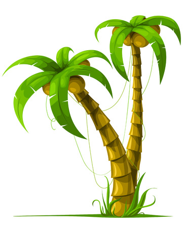 coconuts: vector tropical palm trees isolated on white background illustration Illustration
