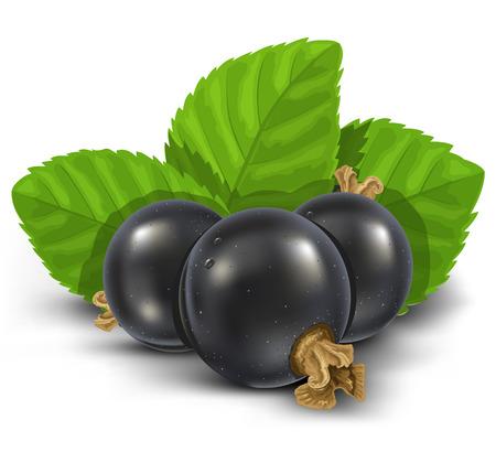 stilllife: black currant fruits with green leaves vector illustration