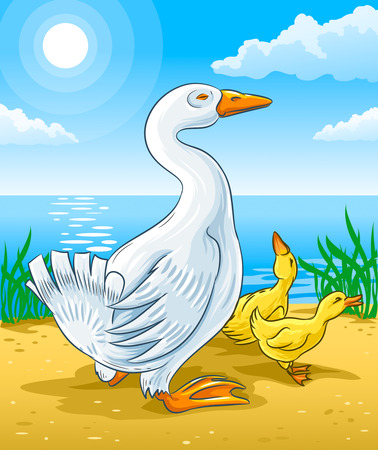 goose: vector illustration of goose mother with gosling kids on river coast Illustration