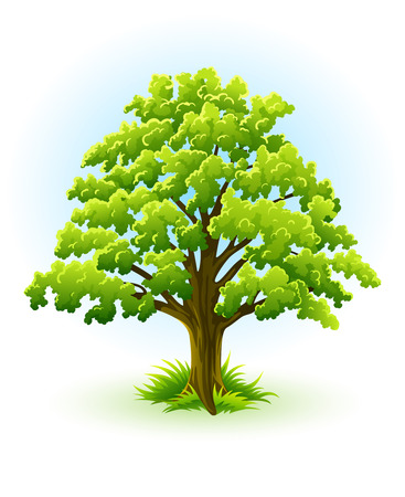 roble arbol: �nico �rbol de roble con follaje verde ? vector de ilustraci�n, aislado en fondo blanco