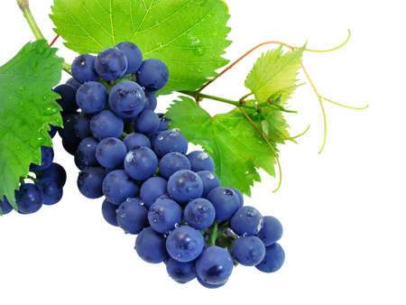 Fresh grape cluster with green leafs isolated Stock Photo - 1613347