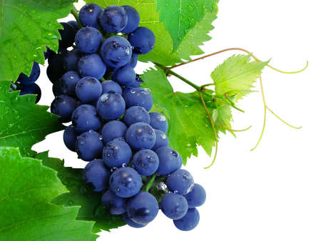 Fresh grape cluster with green leafs isolated Stock Photo - 1613374